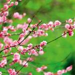 6 najpiękniejszych krzewów do ogrodu
