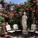 Jak hodować róże?