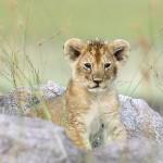 Które z dzikich zwierząt... skrywa się w tobie? [psychotest]