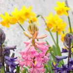 Którym z wiosennych kwiatów jesteś? [psychotest]