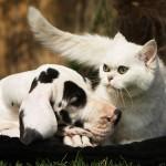 Czy twój mózg przypomina... kota lub psa? [psychotest]