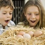 Jajka - kiedy i dla kogo