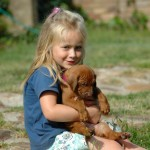 Chomik, kot, pies... Jakie zwierzę dla dziecka?