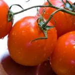 Zalety pomidora