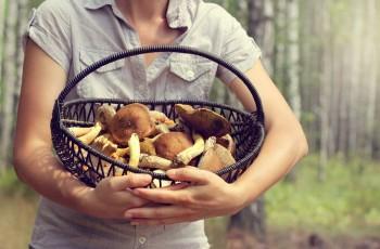 5 zasad, kt�rych przestrzeganie uchroni ci� przed zatruciem grzybami!