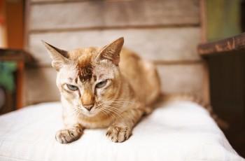Jak oswoić płochliwego kota?