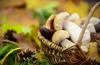 Dowiedz się, ile kalorii mają grzyby!