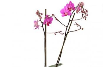 Przepiękne kwiaty na ten wyjątkowy dzień
