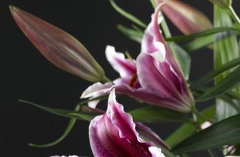 Kwiatowe aranżacje z lilii