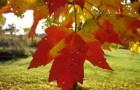Jesienna chandra