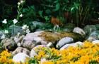 Zakładamy ogródek skalny