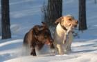 Pomóżmy zwierzętom przetrwać zimę