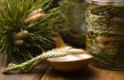 Jak zrobić syrop z sosny?