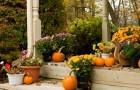 Kalendarz ogrodnika na jesień