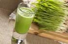 Sok z trawy pszenicznej - mikstura dla zdrowia