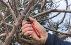 Zimowe prace w ogrodzie - niezbędnik