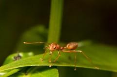 Najskuteczniejsze sposoby na mrówki