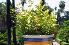 Jak sadzić rośliny do skrzynek balkonowych