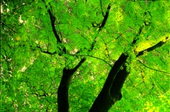 Zielone światło dla przyrody