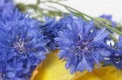 Najmodniejsze kwiaty cięte - Lato 2008
