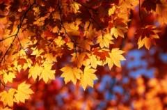Jesień nie musi być smutna