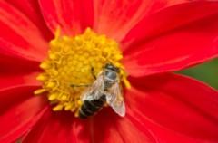 Produkty pszczele - czyżby era nowych leków?