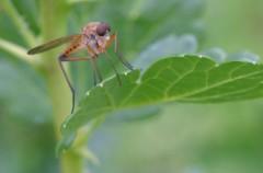 Jak chronić się przed komarami?