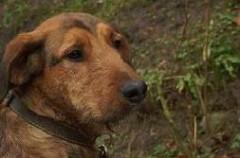Jak pomóc psom przetrwać Sylwestra?