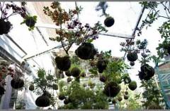 Ogród na wysokościach. Wisząca aranżacja String Gardens