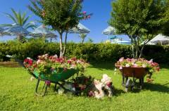 Zakładanie trawnika - trawa z rolki czy siana?
