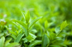Odchudzające działanie roślin