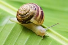 Krem ze ślimaka