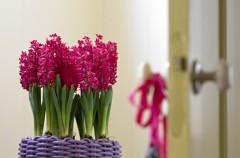 Wiosenne aranżacje z hiacyntami