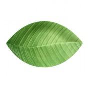Zielone przedwiośnie