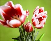 Czy grozi ci wiosenne przesilenie?