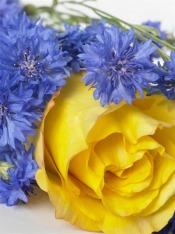 Najmodniejsze kwiaty cięte – Lato 2008