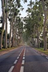 ustanowienie drogi