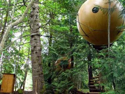 Domy na drzewie... dla dorosłych
