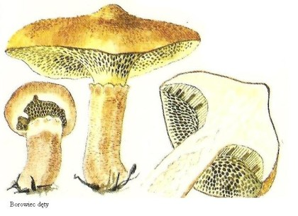 Skarby lasu - grzyby jadalne