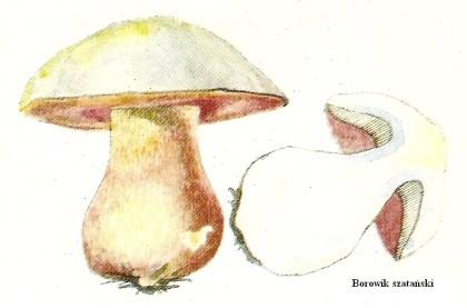 Skarby lasu - grzyby niejadalne i trujące