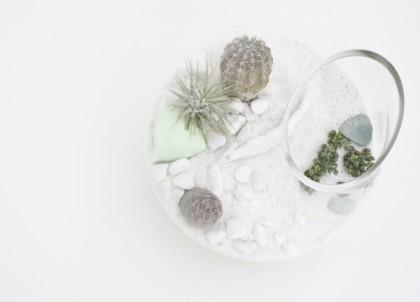 Litíll i jego niesamowite terrarium