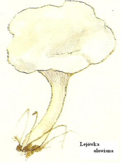 Skarby lasu - grzyby niejadalne i truj�ce