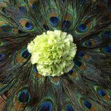 Zdj�cie 15 - Ciekawe kompozycje kwiatowe