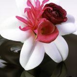 Zdj�cie 24 - Ciekawe kompozycje kwiatowe