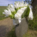 Zdj�cie 34 - Ciekawe kompozycje kwiatowe