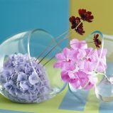 Zdj�cie 38 - Ciekawe kompozycje kwiatowe