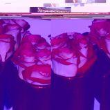 Zdj�cie 56 - Ciekawe kompozycje kwiatowe