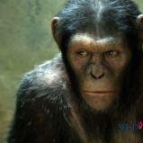 foto 1 - Geneza planety małp (reż. Rupert Wyatt)