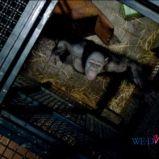 foto 2 - Geneza planety małp (reż. Rupert Wyatt)