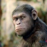 foto 3 - Geneza planety małp (reż. Rupert Wyatt)